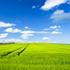 crop field and blue sky